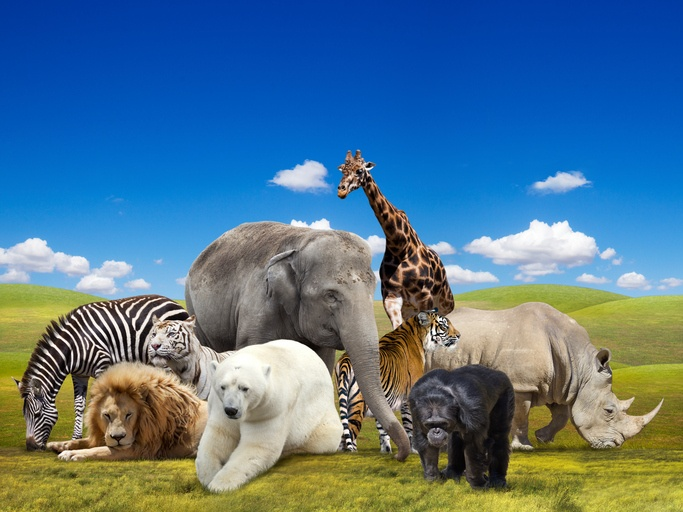 the top 5 zoos in california golden state mortgage
